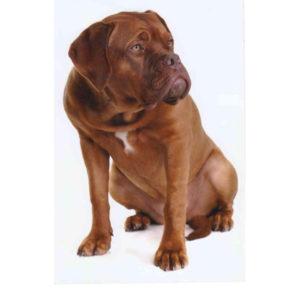 Aliment sec / Croquettes pour chien